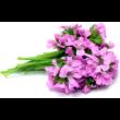 Alteya Organics Rózsageránium (Pelargonium graveolens) illóolaj - bio 5ml