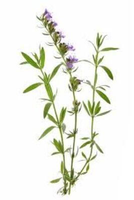 Alteya Organics Hyssop (Hyssopus officinalis) Essential Oil - organic 5ml