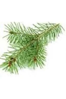 Alteya Organics Pine Tree (Pinus sylvestris) Essential Oil - organic 5ml