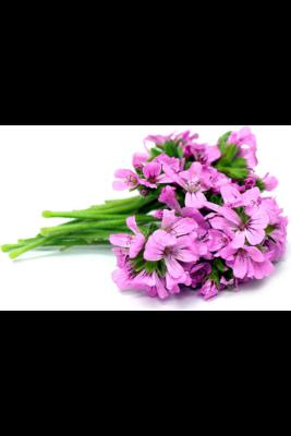 Alteya Organics Rose Geranium (Pelargonium graveolens) Essential Oil - organic 10ml