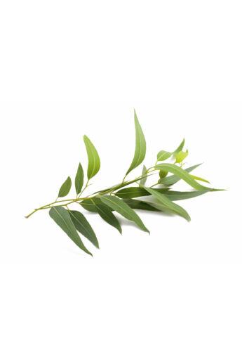 Alteya Organics Eukaliptusz (Eucalyptus globulus) illóolaj - bio 5ml